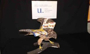 Vďaka fondu na podporu umenia sa dočkali obnovy preparované zvieratá vo Vlastivednom múzeu